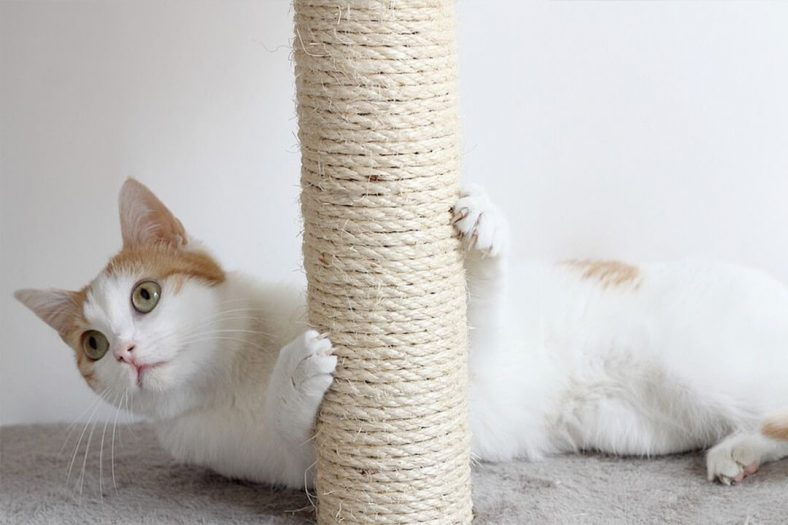 Tırmalama Tahtası Seven Kedi