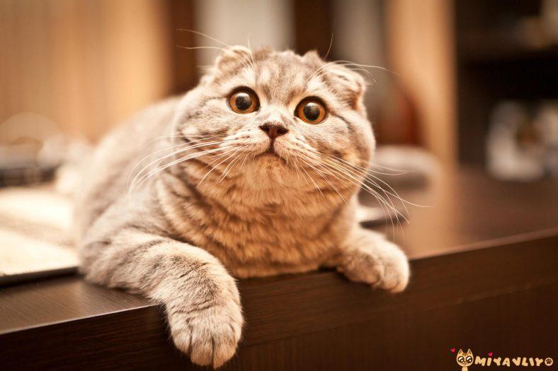 Yengeç Burcu Kedi