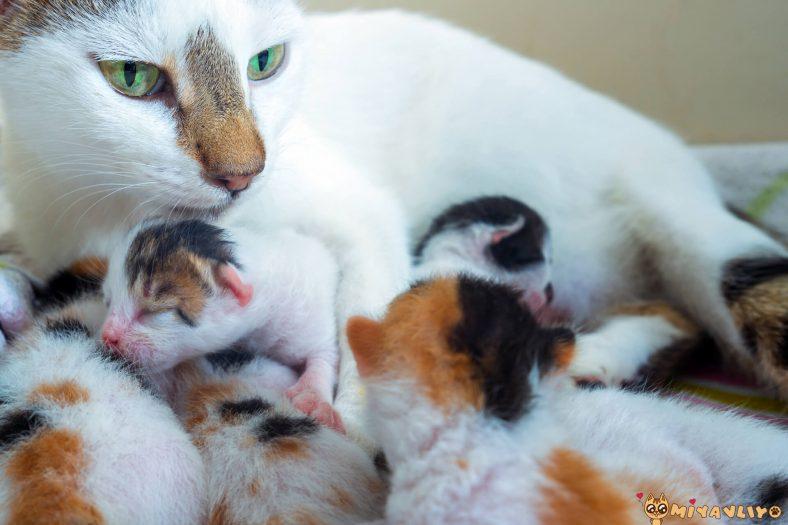 Kediler Senede Kaç Kez Doğum Yapar?