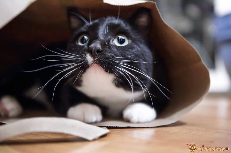 Kedilerin Korkma Nedenleri Nelerdir?