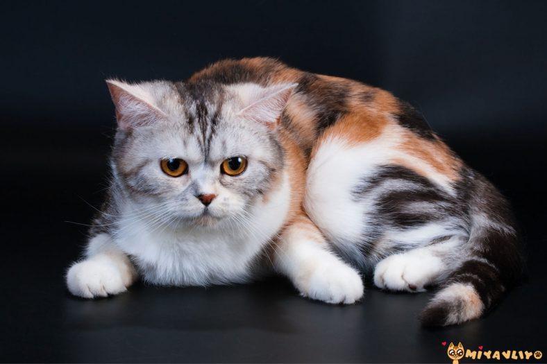 Cins Kedi Nasıl Anlaşılır?
