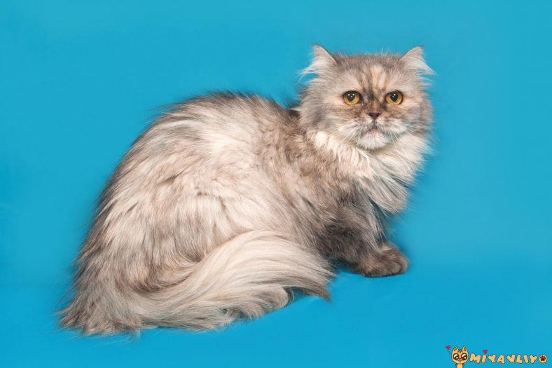 Egzotik Dişi Kedi İsimleri