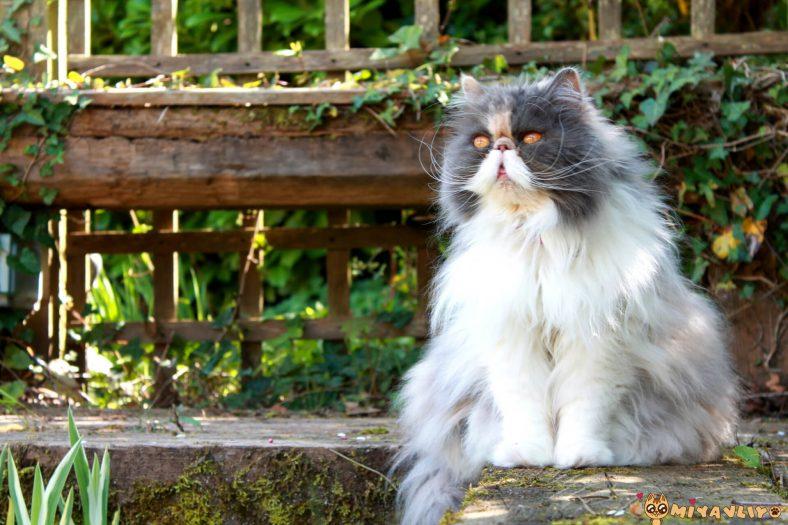 Farsça Dişi Kedi İsimleri