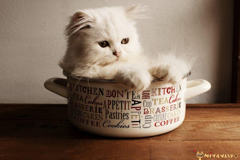 Farsça Erkek Kedi İsimleri