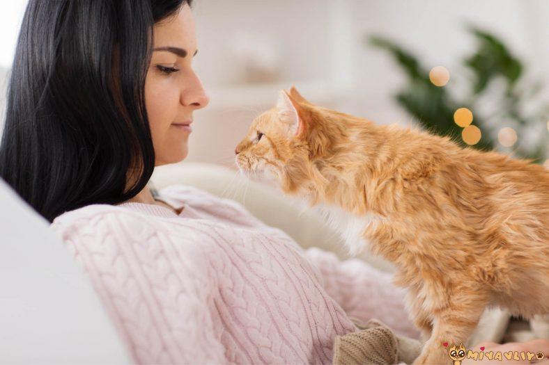 Kedilerle İyi Anlaşmanın Formülü