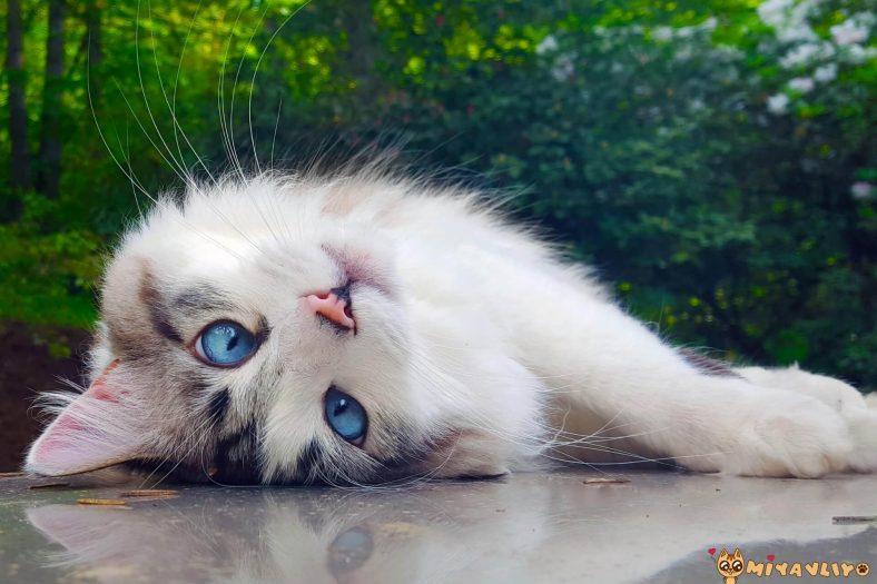 Komik Dişi Kedi İsimleri
