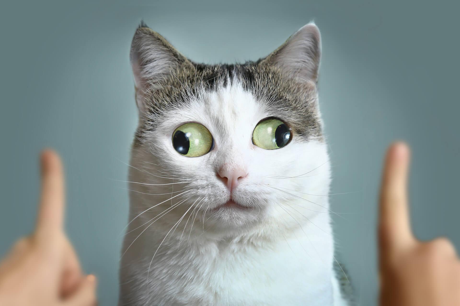 En Komik Kedi İsimleri Miyavliyo