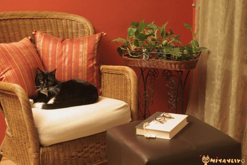 Osmanlıca Dişi Kedi İsimleri