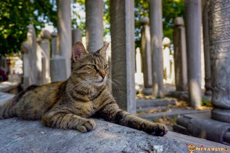 Osmanlıca Erkek Kedi İsimleri