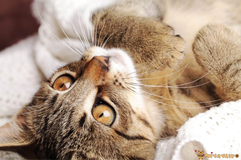 Yabancı Erkek Kedi İsimleri
