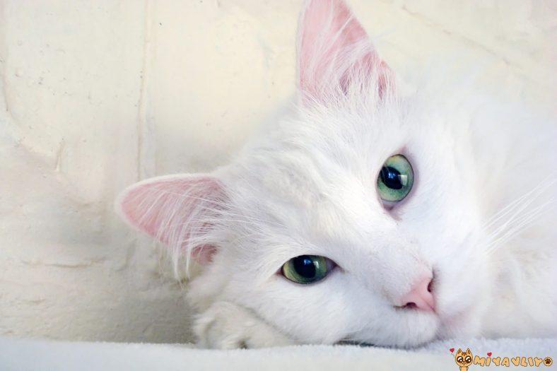 Beyaz Dişi Kedi İsimleri