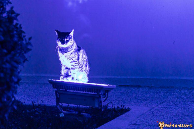 En Yaratıcı Kedi İsimleri