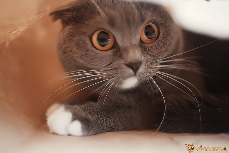 Gri Dişi Kedi İsimleri