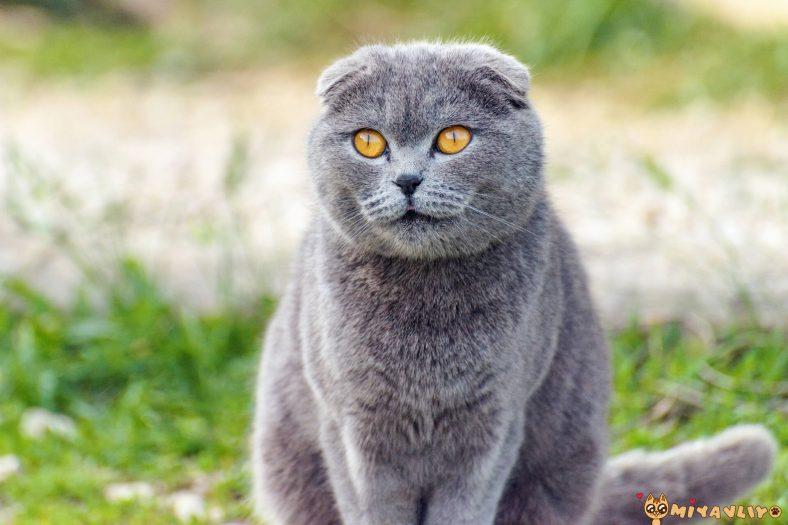 Gri Erkek Kedi İsimleri
