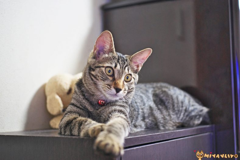 İngilizce Erkek Kedi İsimleri
