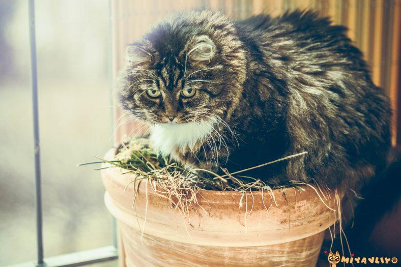 Kedi Kumu Yoksa Ne Yapılır?