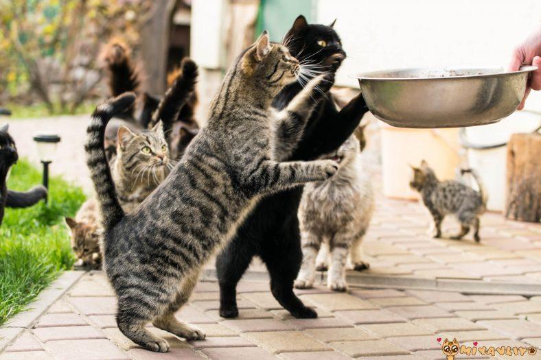 Kediler Hangi Ev Yemeklerini Yer