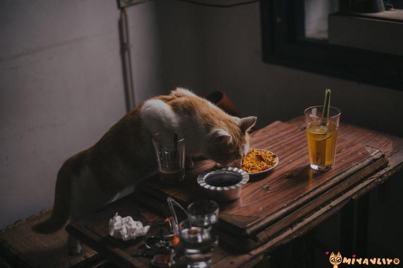 Kediler İçin Hazırlanan Yemeklerde Olmaması Gerekenler