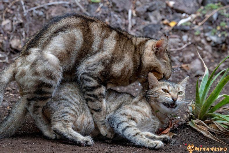 Kedilerin Çiftleşme Ayı