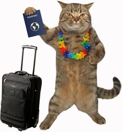 Kediye Pasaport Çıkartmak