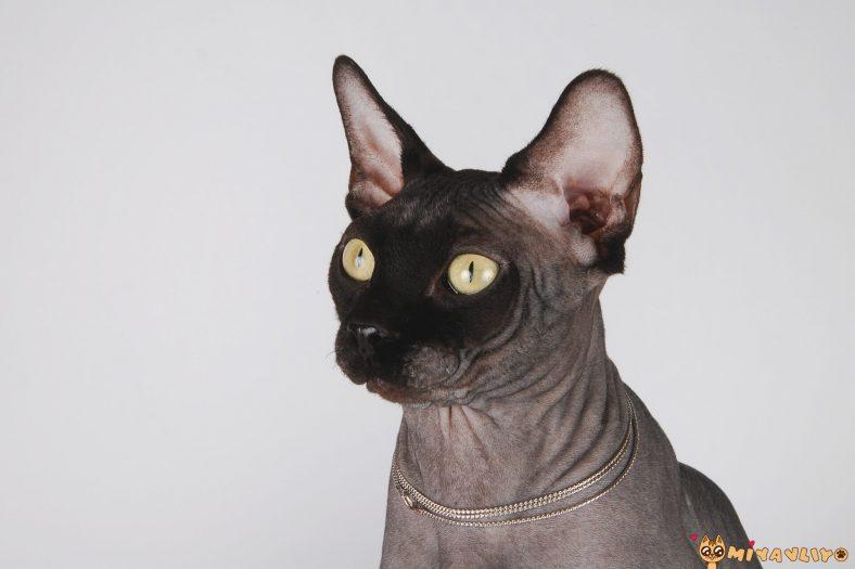 Mitolojik Dişi Kedi İsimleri