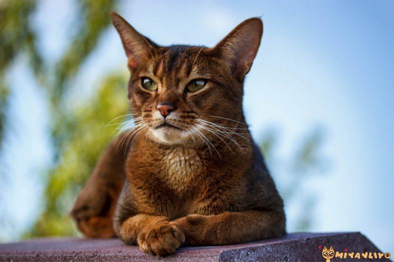 Mitolojik Erkek Kedi İsimleri