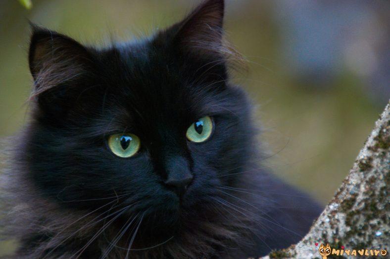 Siyah (Kara) Dişi Kedi İsimleri