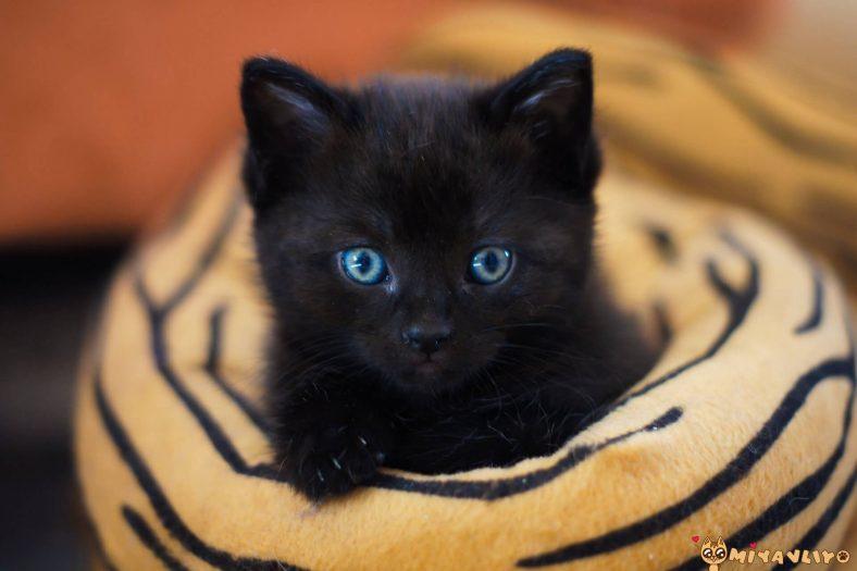 Siyah (Kara) Erkek Kedi İsimleri