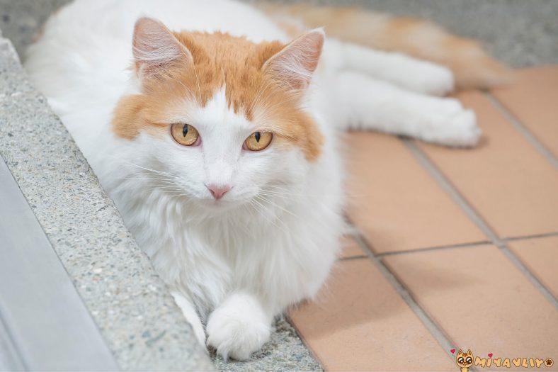 Türkçe (Yerli) Dişi Kedi İsimleri