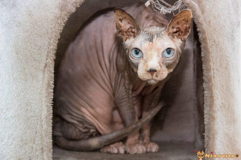 Tüysüz Erkek Kedi İsimleri
