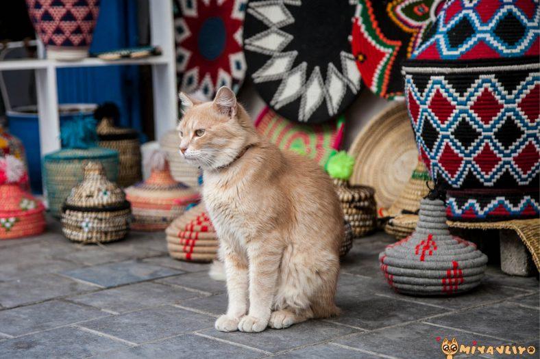 Kürtçe Dişi Kedi İsimleri