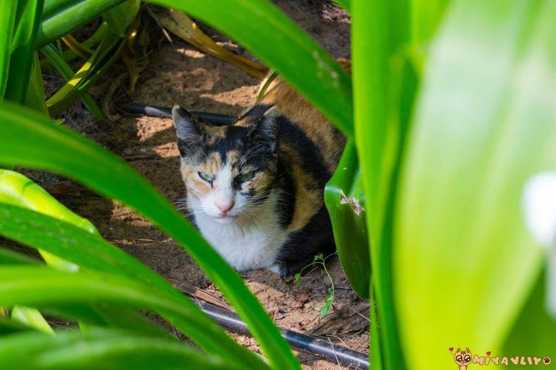 Kürtçe Erkek Kedi İsimleri