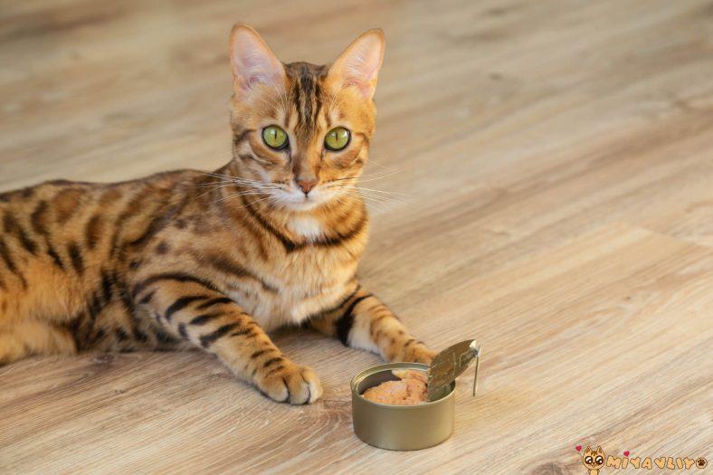Ton Balığı Kediler İçin Sağlıklı mı?