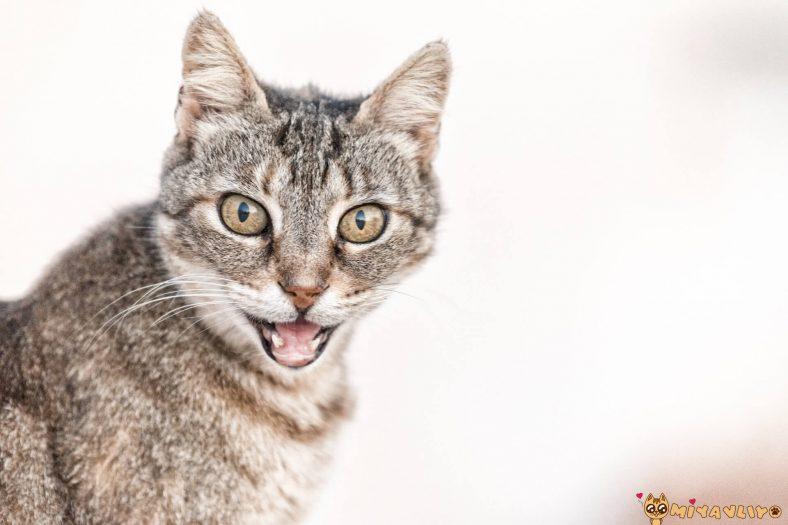 Unisex Kedi İsimi