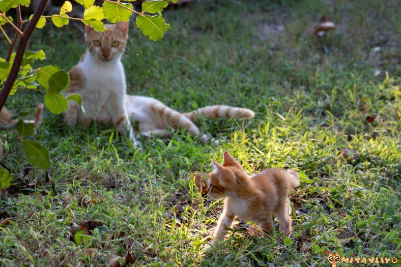Anne Kedi Neden Yavrularını Reddeder?