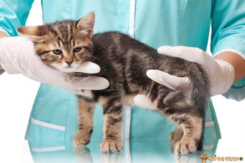 Kakasını Yapamayan Yavru Kedi.jpg
