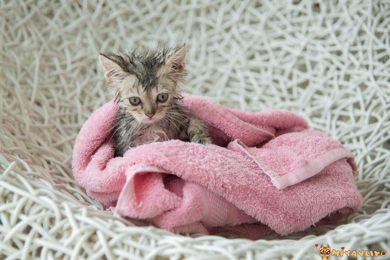 Kedi Bebek Şampuanı ile Yıkanır mı?