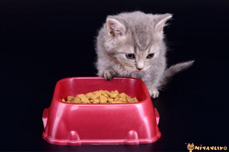 Yavru Kedi Ne Yer?