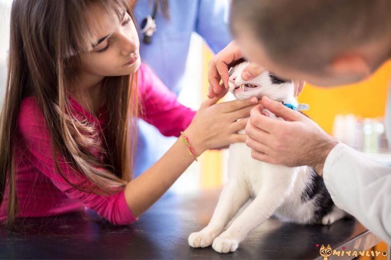 Kedinin Ağzından Salya Akması Neyin İşaretçisi?