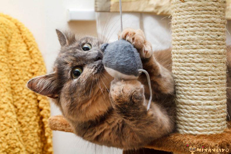 Cool Dişi Kedi İsimleri