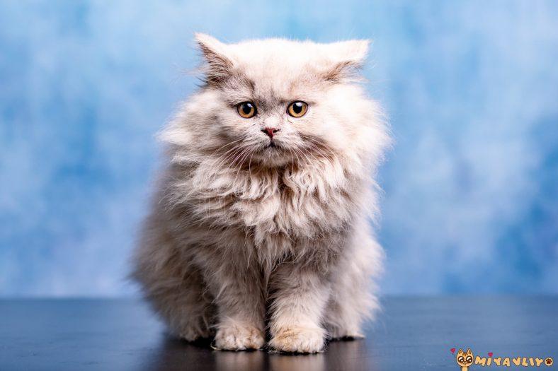 En Cool Kedi İsimleri