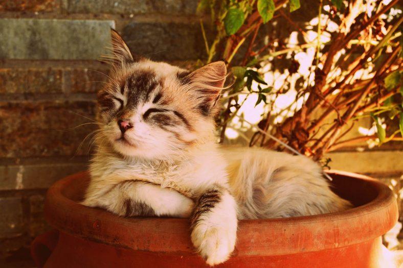 Değişik (İlginç) Dişi Kedi İsimleri