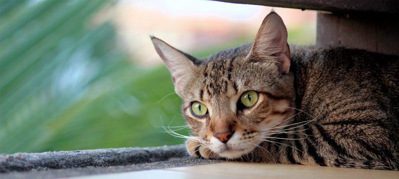 Değişik (İlginç) Erkek Kedi İsimleri