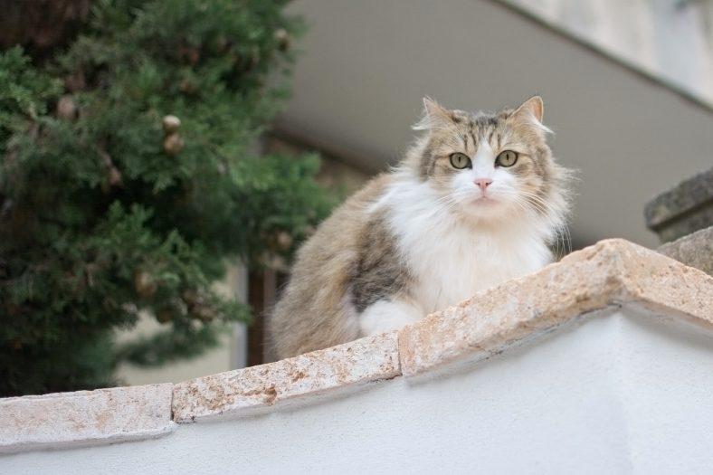 İspanyolca Dişi Kedi İsimleri