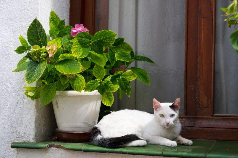 İspanyolca Erkek Kedi İsimleri