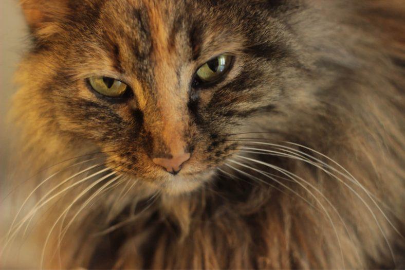 Kahverengi Erkek ve Dişi Kedi İsimleri
