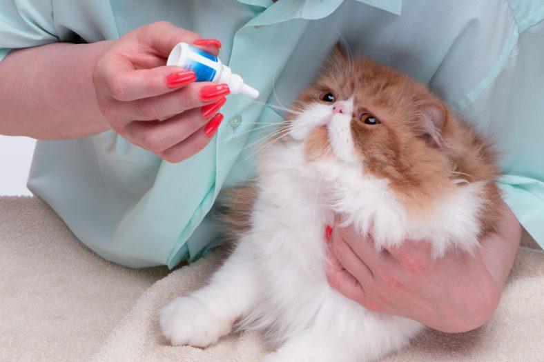 Kedi Göz Hastalıkları Belirtileri ve Tedavisi