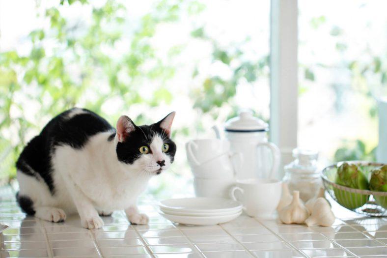 Kedi Sarımsak Yer mi?