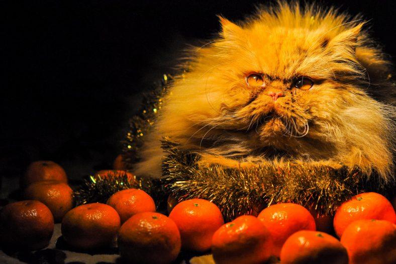 Kedil Mandalina Yer mi?
