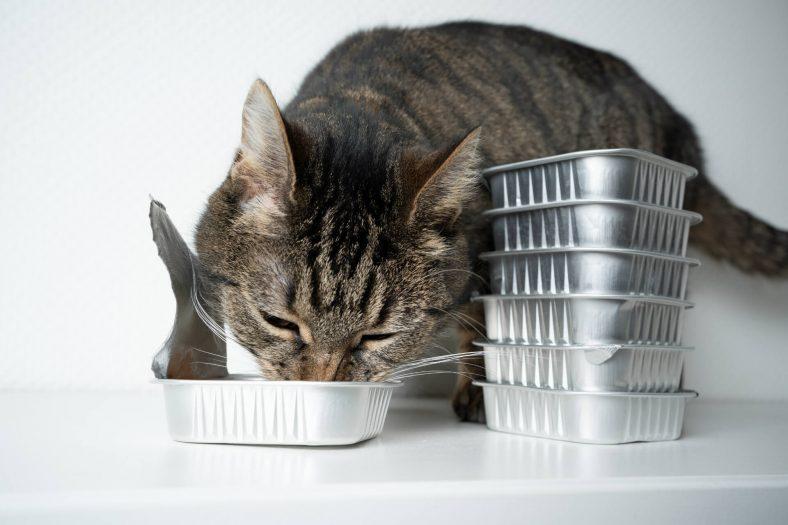 Kediler İçin Çorba Tarifi